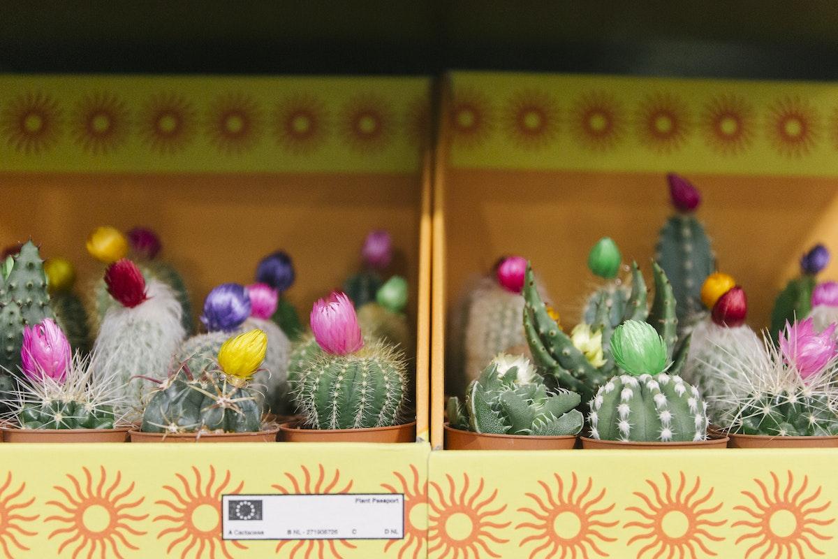 New Covent Garden Flower Market March 2020 In Season Report Rona Wheeldon Flowerona Mini Cacti At Arnott Mason