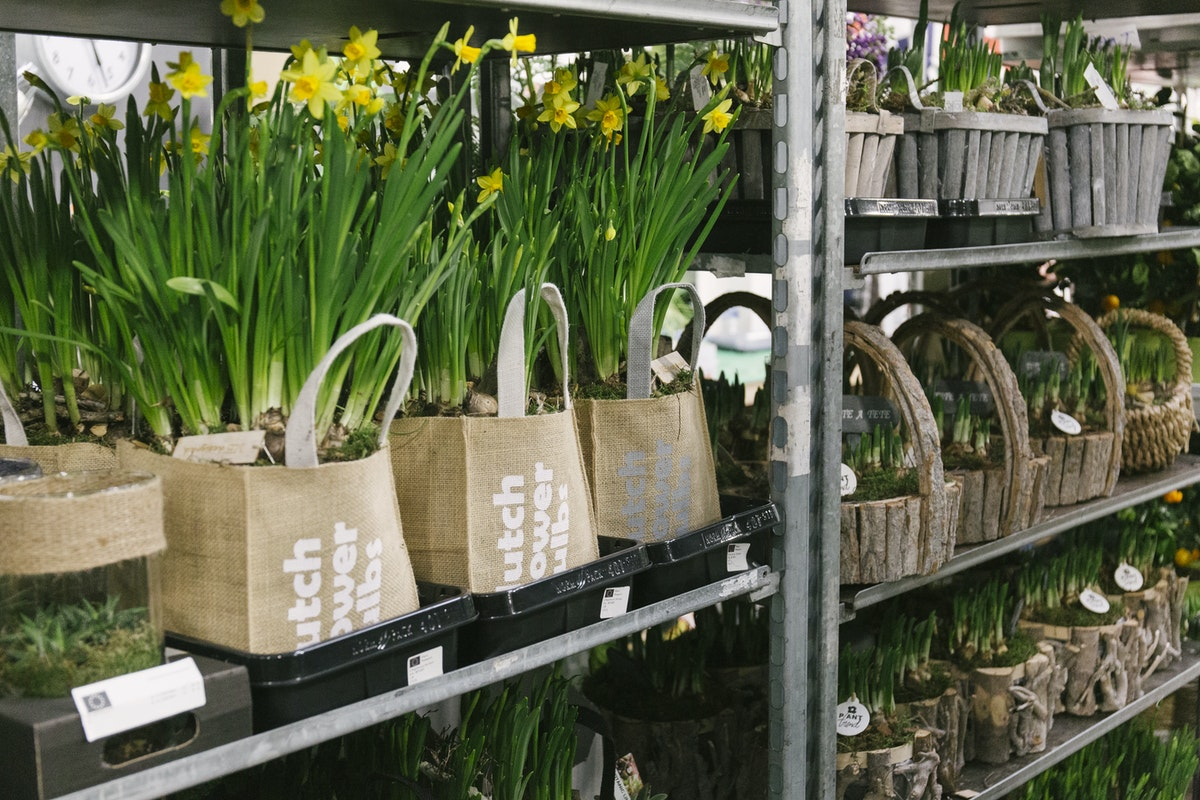New Covent Garden Flower Market March 2020 In Season Report Rona Wheeldon Flowerona Planted Narcissi And Muscari Bulbs At The Floral Garden Group