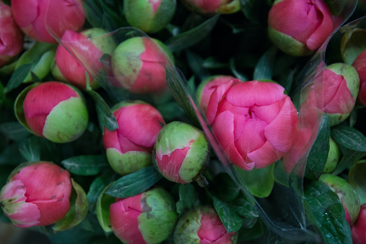 New Covent Garden Flower Market May 2018 A Florists Guide To Peonies Rona Wheeldon Flowerona Coral Sunset Peony At Floral Garden Group A Goodchild Ltd