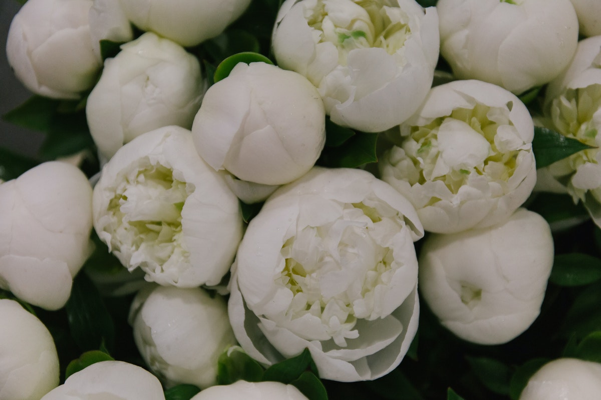 New Covent Garden Flower Market May 2018 A Florists Guide To Peonies Rona Wheeldon Flowerona Duchesse De Nemours Peony At Bloomfield