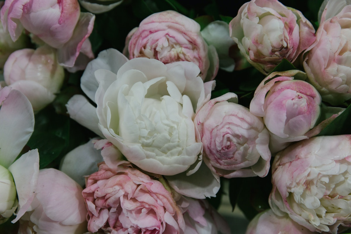New Covent Garden Flower Market May 2018 A Florists Guide To Peonies Rona Wheeldon Flowerona Gardenia Peony At Bloomfield