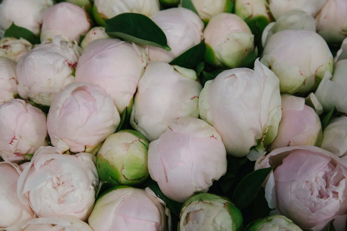 New Covent Garden Flower Market May 2018 A Florists Guide To Peonies Rona Wheeldon Flowerona Mother'S Choice Peony At Dg Wholesale Flowers