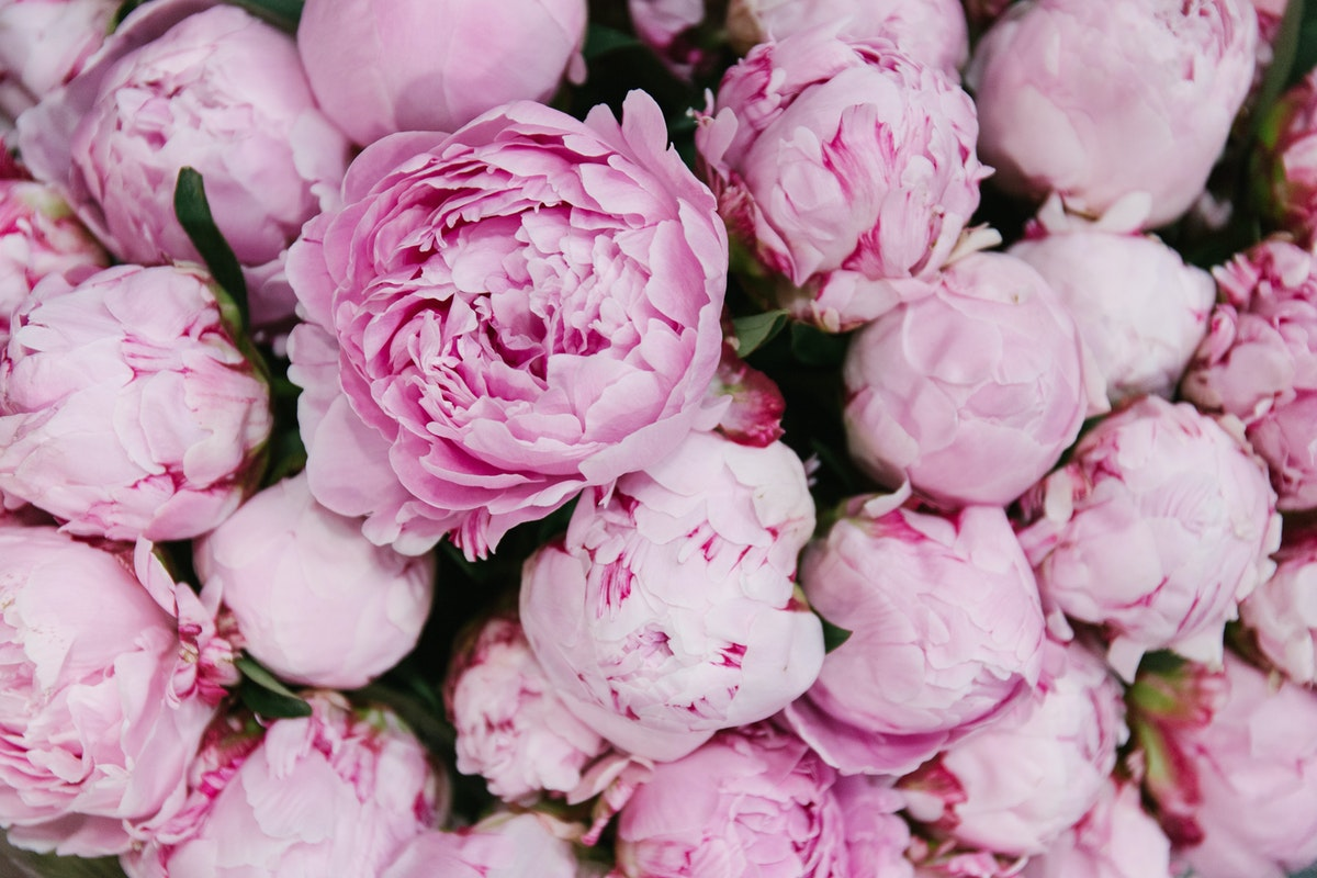 New Covent Garden Flower Market May 2018 A Florists Guide To Peonies Rona Wheeldon Flowerona Sarah Bernhardt Peony At Bloomfield