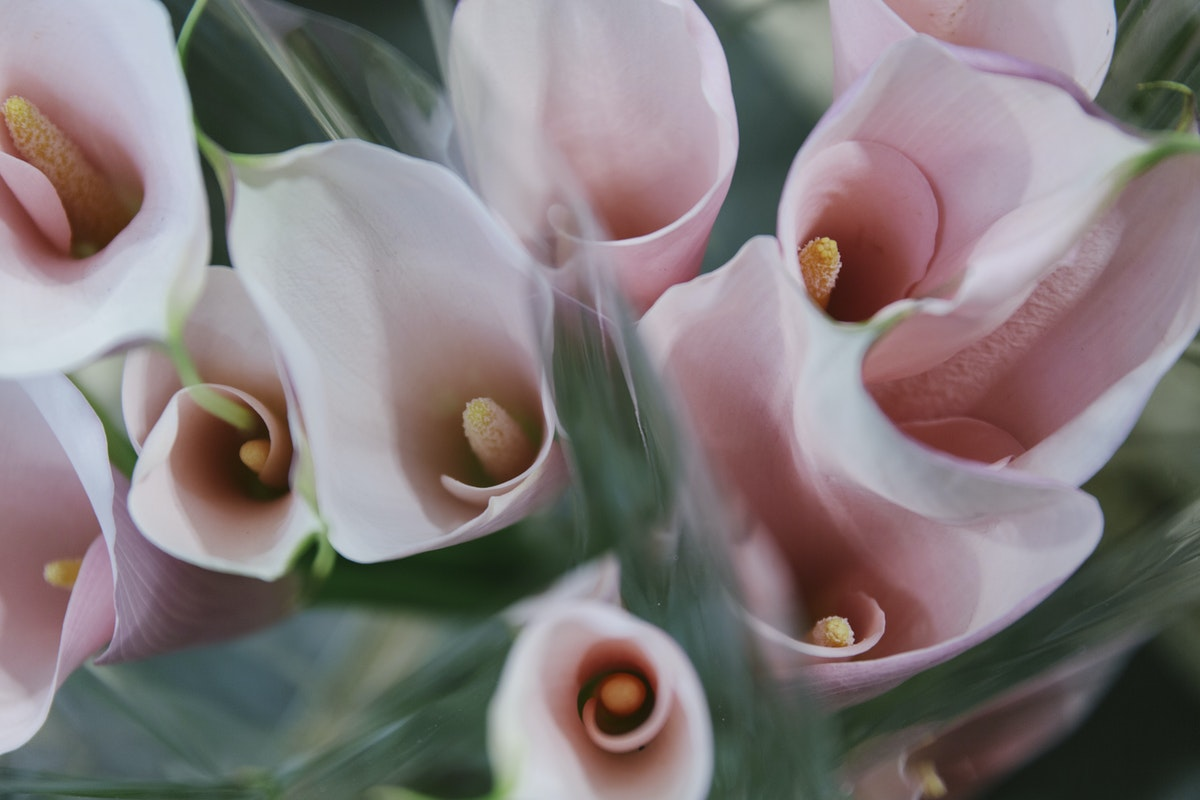 New Covent Garden Flower Market May 2019 A Florists Guide To Calla Lilies Rona Wheeldon Flowerona Cala Lily Flamingo At Floral Garden Group