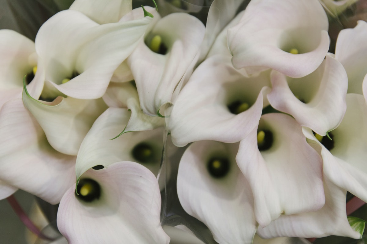 New Covent Garden Flower Market May 2019 A Florists Guide To Calla Lilies Rona Wheeldon Flowerona Calla Lily Captain Melrose At Bloomfield