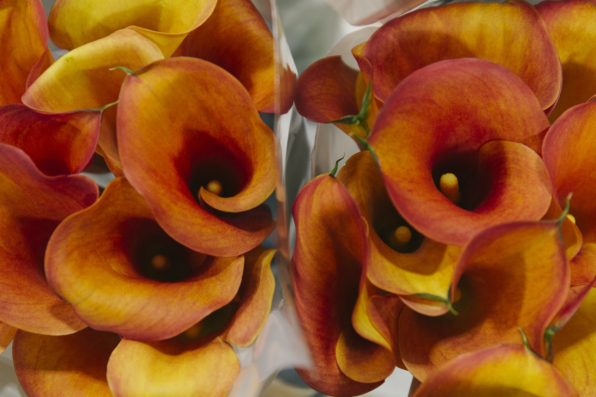 New Covent Garden Flower Market May 2019 A Florists Guide To Calla Lilies Rona Wheeldon Flowerona Calla Lily Captain Odeon At Zest Flowers