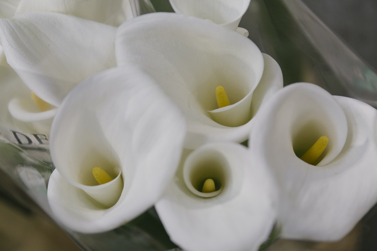 New Covent Garden Flower Market May 2019 A Florists Guide To Calla Lilies Rona Wheeldon Flowerona Calla Lily Colombe De La Paix At Dg Wholesale Flowers