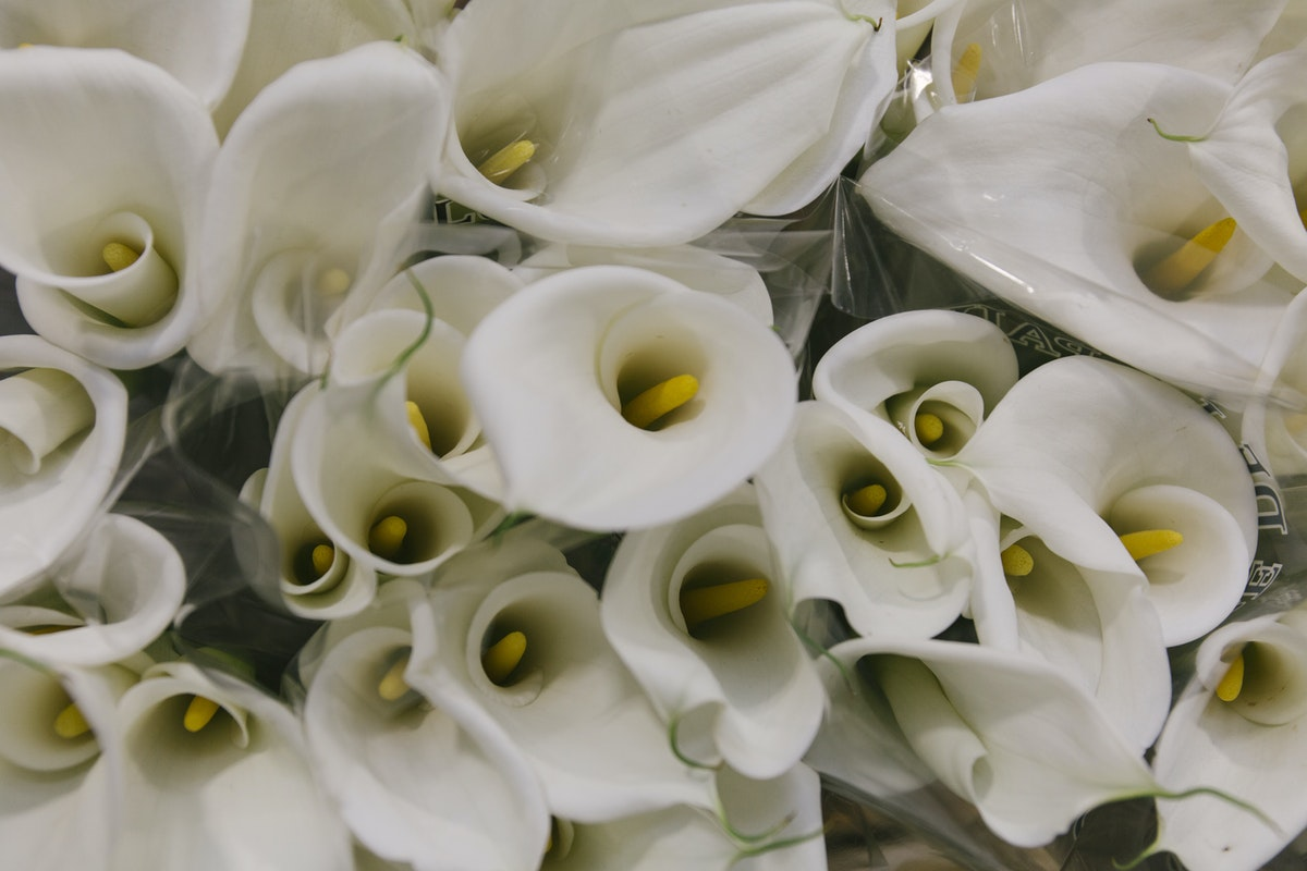 New Covent Garden Flower Market May 2019 A Florists Guide To Calla Lilies Rona Wheeldon Flowerona Calla Lily Colombe De La Paix At Floral Garden Group