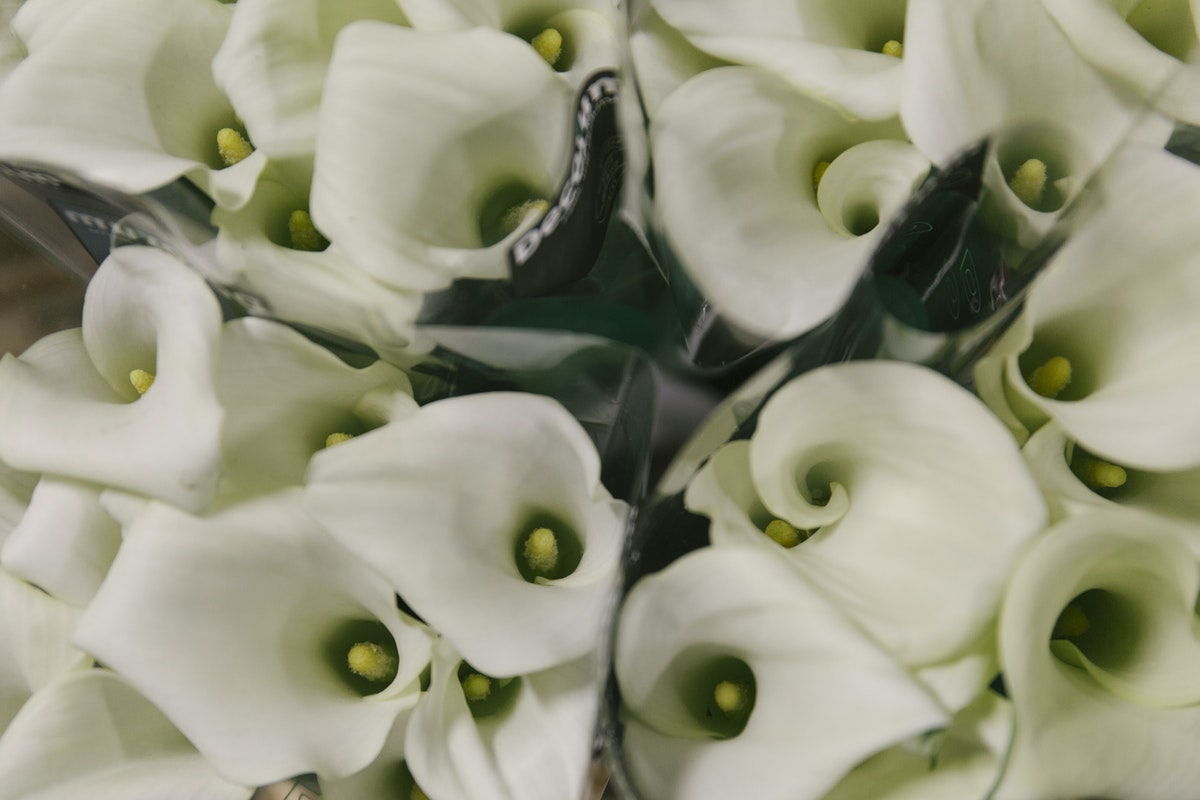 New Covent Garden Flower Market May 2019 A Florists Guide To Calla Lilies Rona Wheeldon Flowerona Calla Lily Crystal Blush At Dennis Edwards Flowers