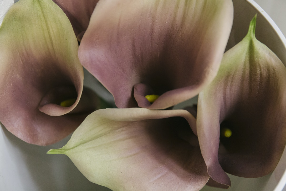 New Covent Garden Flower Market May 2019 A Florists Guide To Calla Lilies Rona Wheeldon Flowerona Silk Calla Lilies