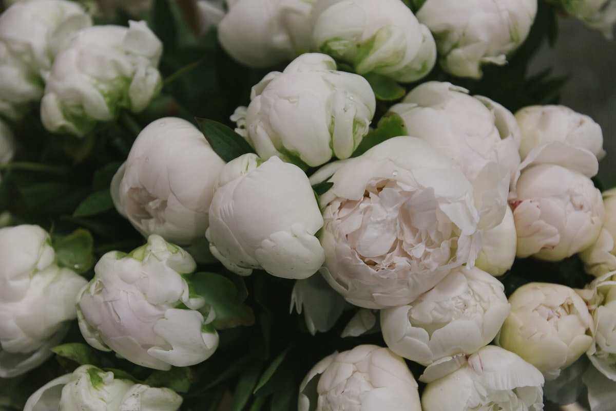 New Covent Garden Flower Market May 2019 In Season Report Rona Wheeldon Flowerona Peony Madame Claude Tain Peonies At Bloomfield