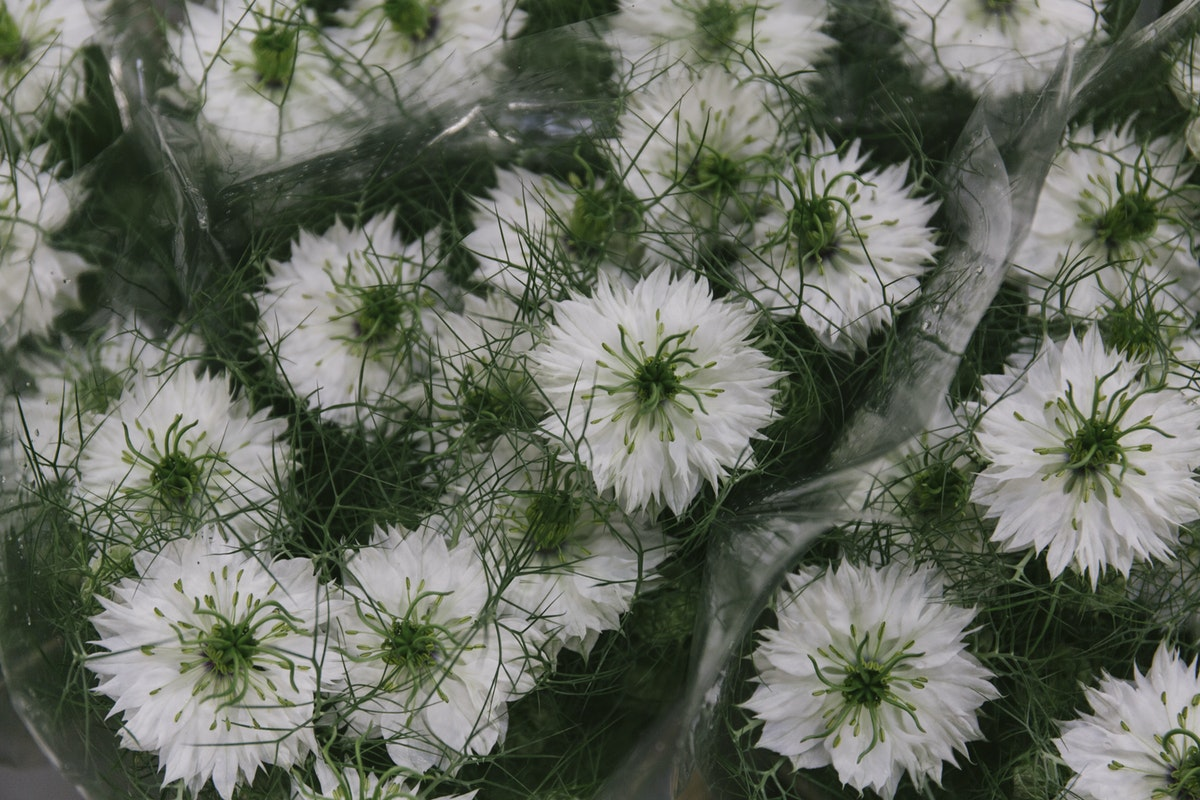 New Covent Garden Flower Market May 2019 In Season Report Rona Wheeldon Flowerona White Nigella At Zest Flowers