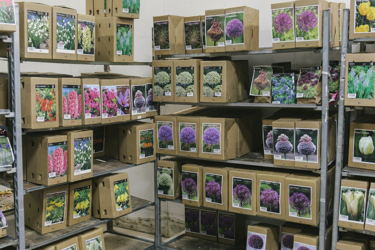 New Covent Garden Flower Market November 2019 In Season Report Rona Wheeldon Flowerona Boxes Of Bulbs At Evergreen
