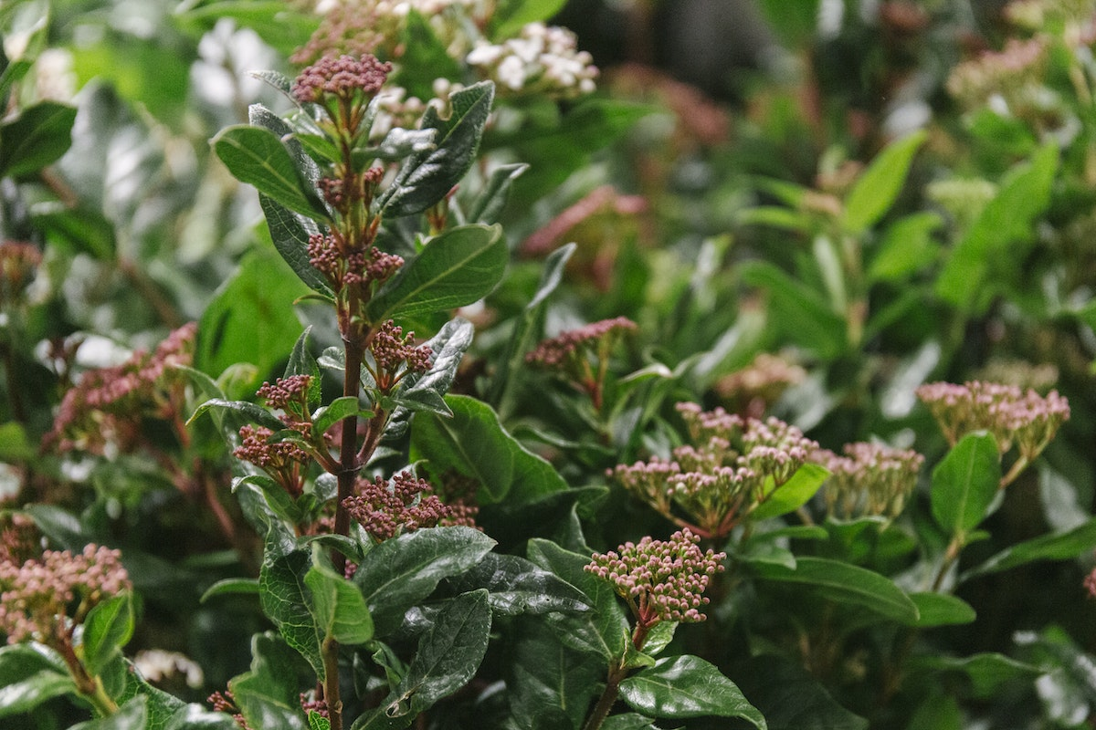 New Covent Garden Flower Market November 2019 In Season Report Rona Wheeldon Flowerona British Viburnum At Porters Foliage