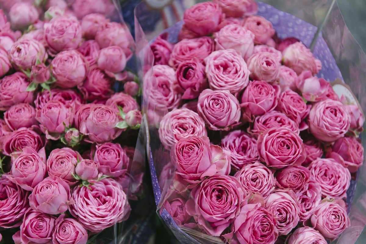New Covent Garden Flower Market November 2019 In Season Report Rona Wheeldon Flowerona Giselle Spray Rose At Dg Wholesale Flowers