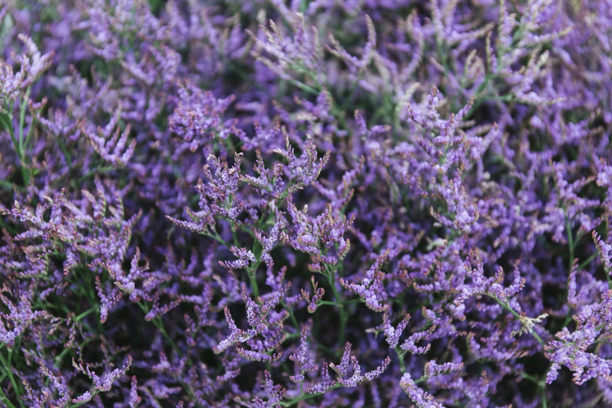 New Covent Garden Flower Market November 2019 In Season Report Rona Wheeldon Flowerona Limonium Safora Dark Blue At Bloomfield