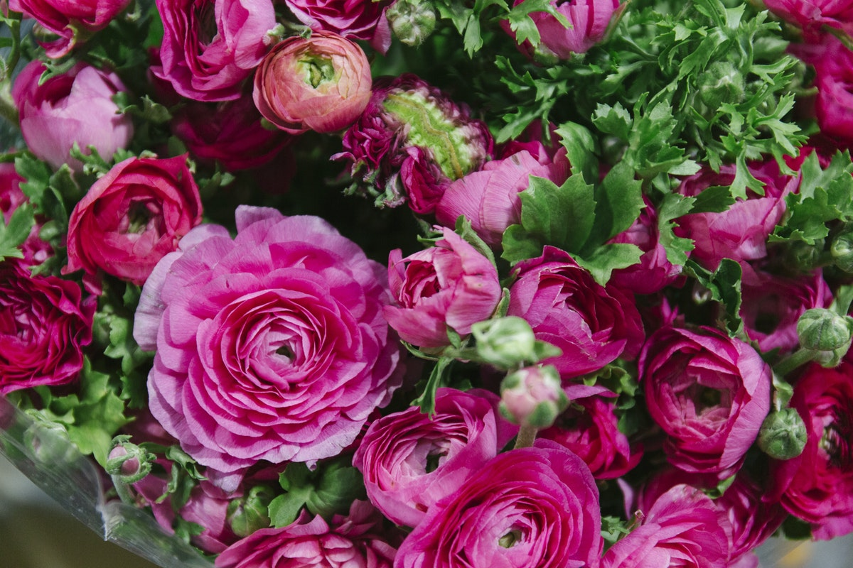 New Covent Garden Flower Market November 2019 In Season Report Rona Wheeldon Flowerona Pink Ranunculus At Dg Wholesale Flowers