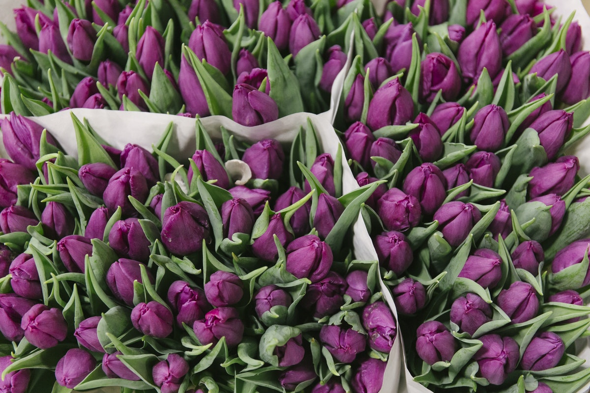 New Covent Garden Flower Market November 2019 In Season Report Rona Wheeldon Flowerona Purple Prince Tulips At Bloomfield