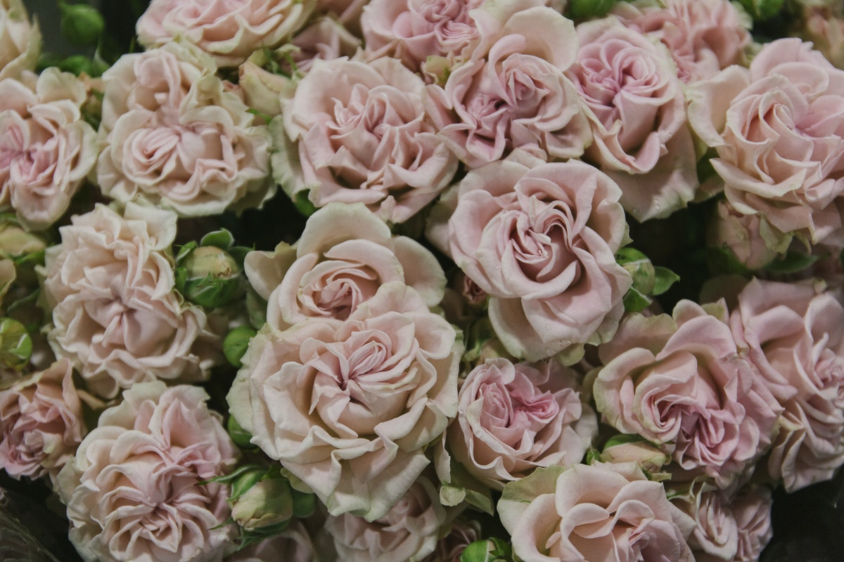 New Covent Garden Flower Market November 2019 In Season Report Rona Wheeldon Flowerona Sweet Flow Spray Rose At Bloomfield