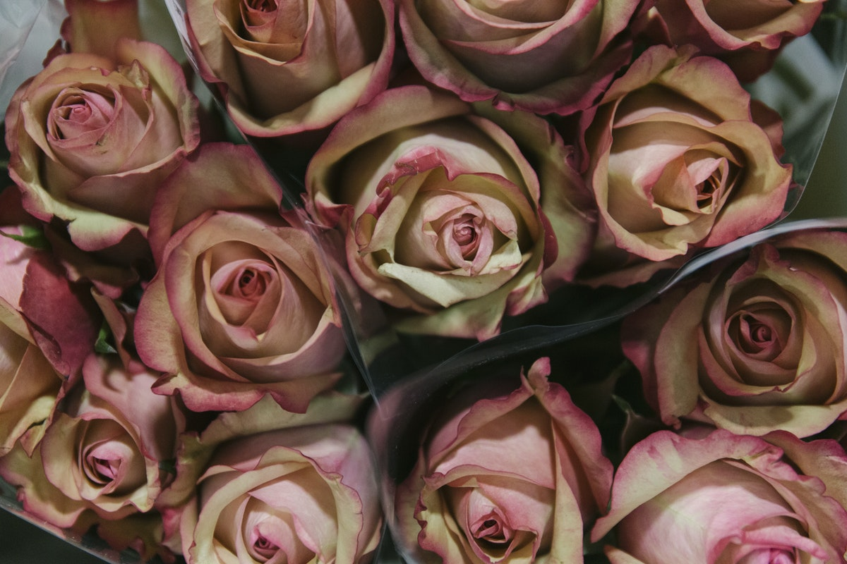 New Covent Garden Flower Market November 2019 In Season Report Rona Wheeldon Flowerona Vintage Rose At Bloomfield