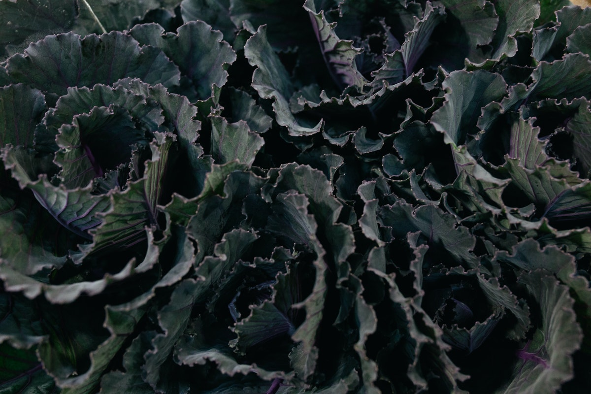 New Covent Garden Flower Market October 2017 Flower Market Report Brassica Oleracea Black Leaf At Dg Wholesale Flowers
