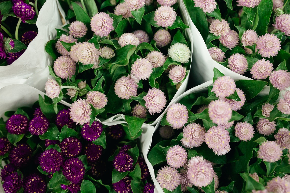 New Covent Garden Flower Market October 2017 Flower Market Report Gomphrena At Dennis Edwards Flowers