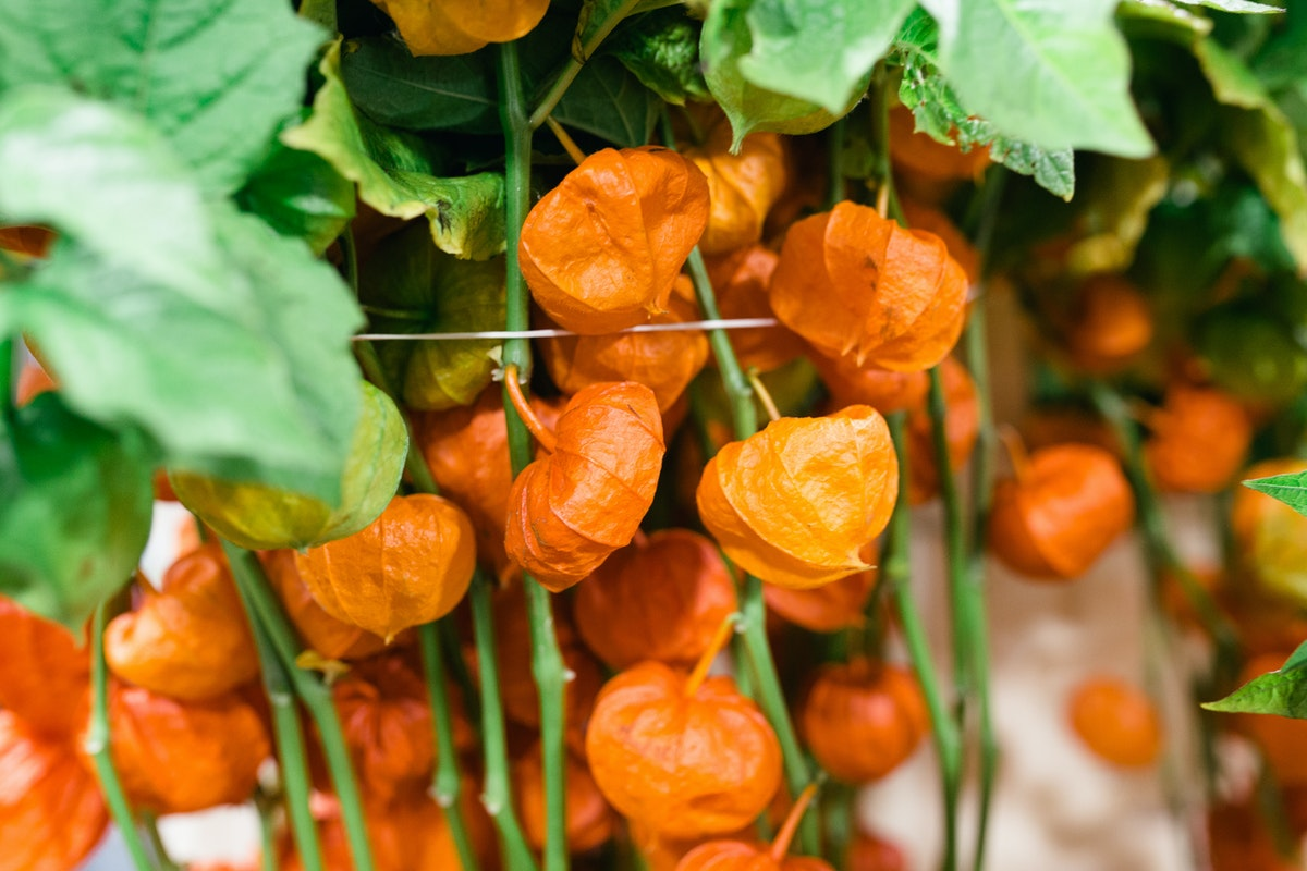 New Covent Garden Flower Market October 2017 Flower Market Report Physalis At Bloomfield