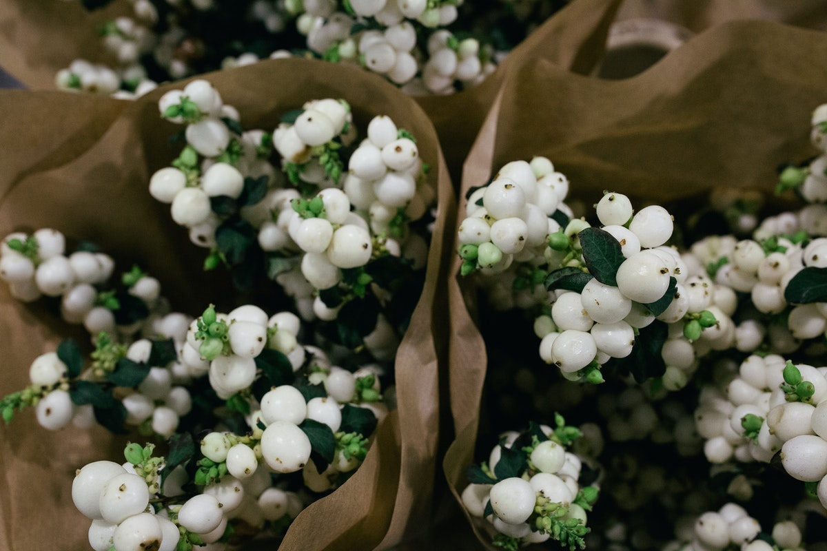 New Covent Garden Flower Market October 2017 Product Profile Report Lemon And Lime Snowberry At Dg Wholesale Flowers