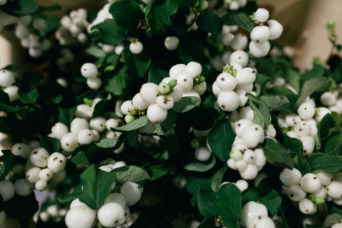 New Covent Garden Flower Market October 2017 Product Profile Report Magical Bright Fantasy Snowberry At Bloomfield
