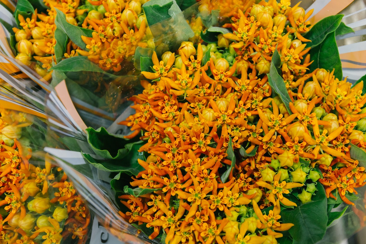 New Covent Garden Flower Market October 2018 In Season Report Rona Wheeldon Flowerona Asclepias Beatrix At Dg Wholesale Flowers