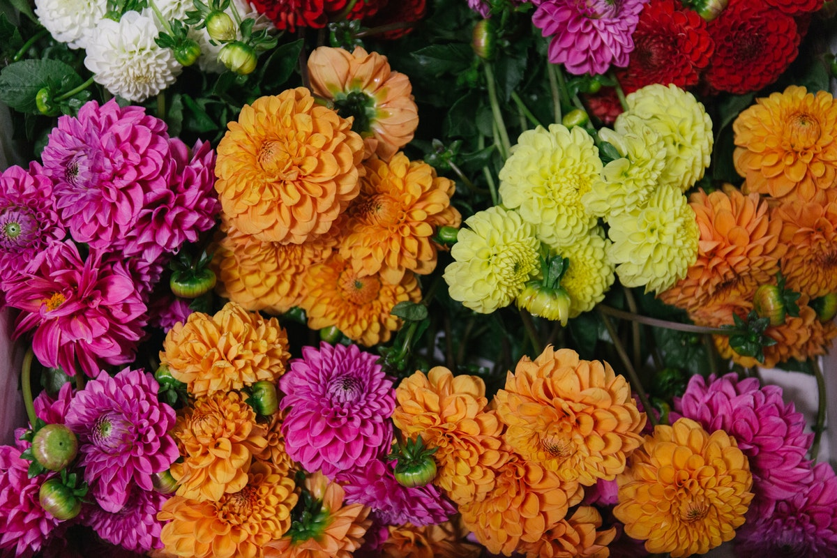 New Covent Garden Flower Market October 2018 In Season Report Rona Wheeldon Flowerona British Dahlias At Pratley