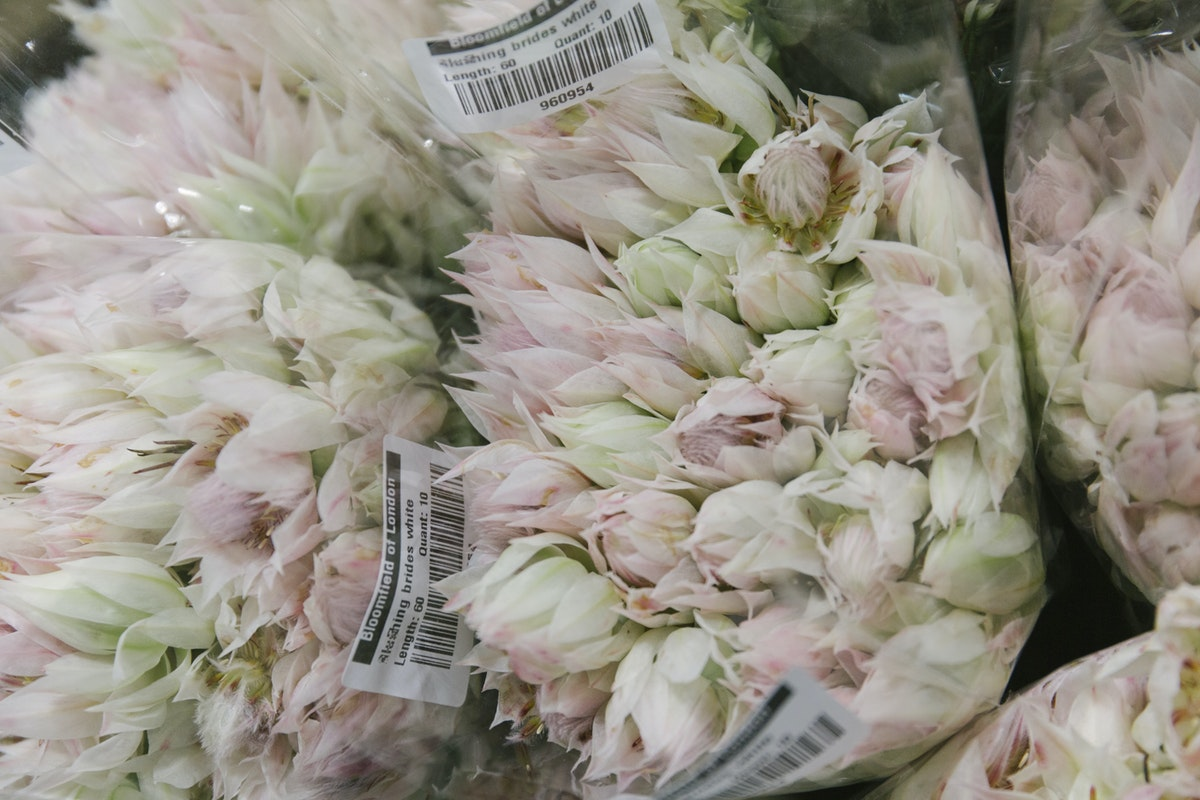 New Covent Garden Flower Market October 2019 In Season Report Rona Wheeldon Flowerona Blushing Bride White At Bloomfield