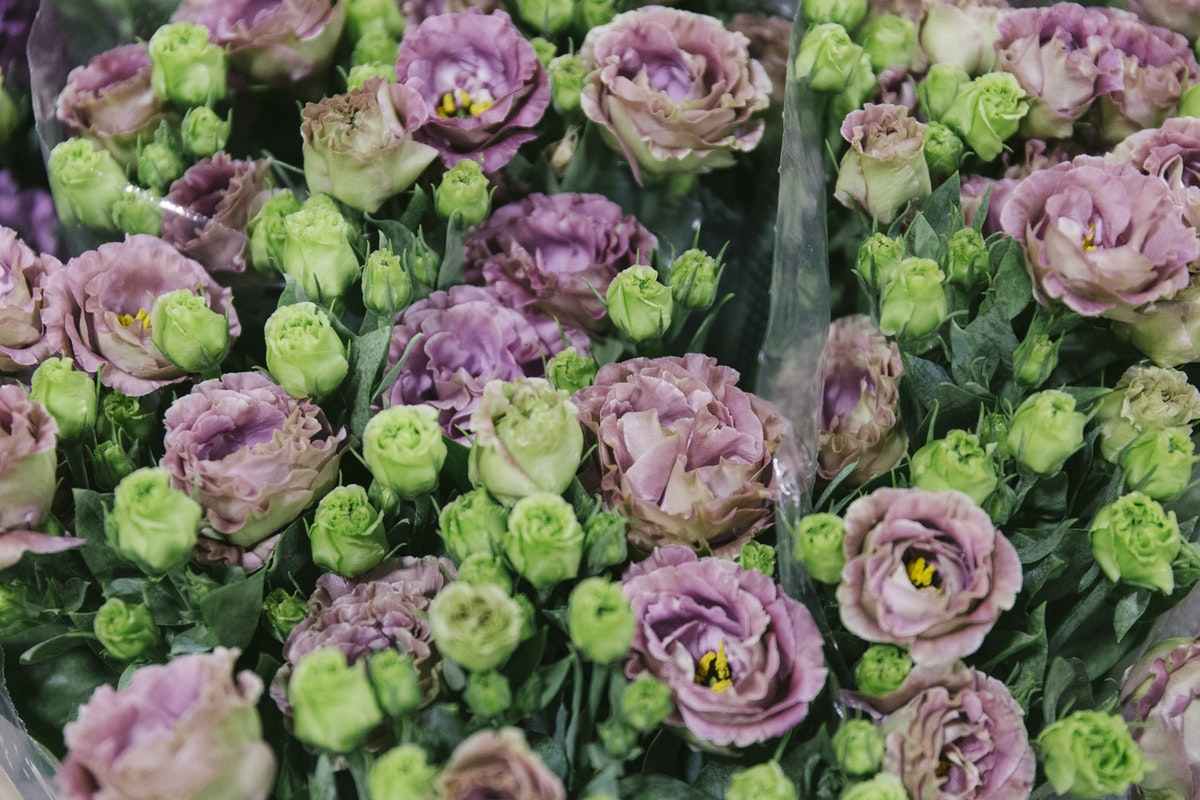 New Covent Garden Flower Market October 2019 In Season Report Rona Wheeldon Flowerona Eustoma Rosanne Brown At Bloomfield