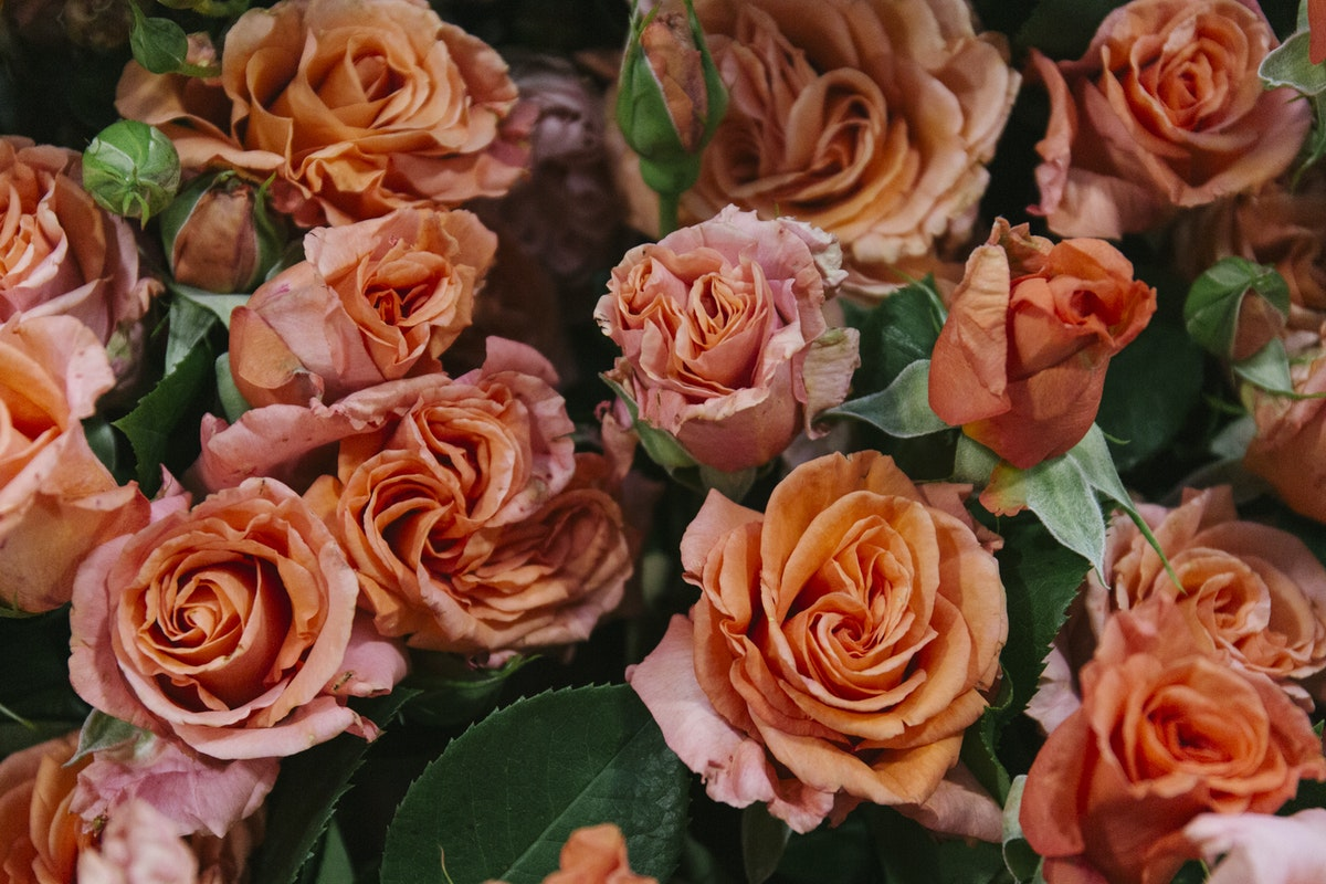 New Covent Garden Flower Market Report Living Coral Pantone Of The Year 2019 British Coral Roses At Zest Flowers