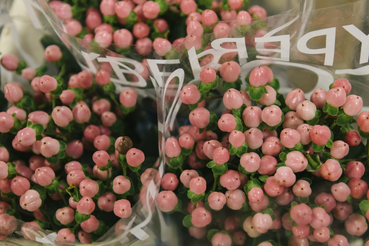 New Covent Garden Flower Market Report Living Coral Pantone Of The Year 2019 Coco Casino Hypericum At Zest Flowers
