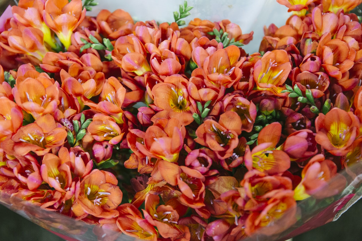 New Covent Garden Flower Market Report Living Coral Pantone Of The Year 2019 Coral Freesias At Dennis Edwards Flowers