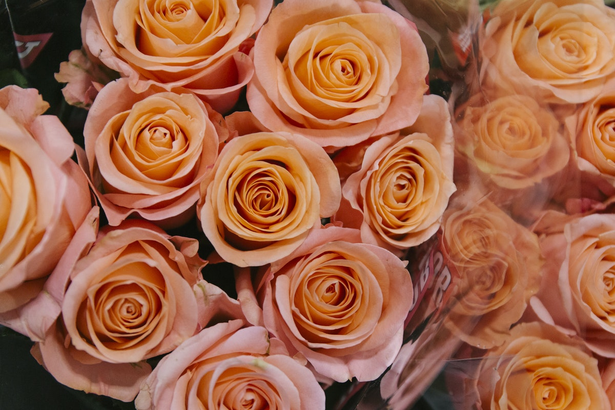 New Covent Garden Flower Market Report Living Coral Pantone Of The Year 2019 Lady Margaret Rose At Dg Wholesale Flowers