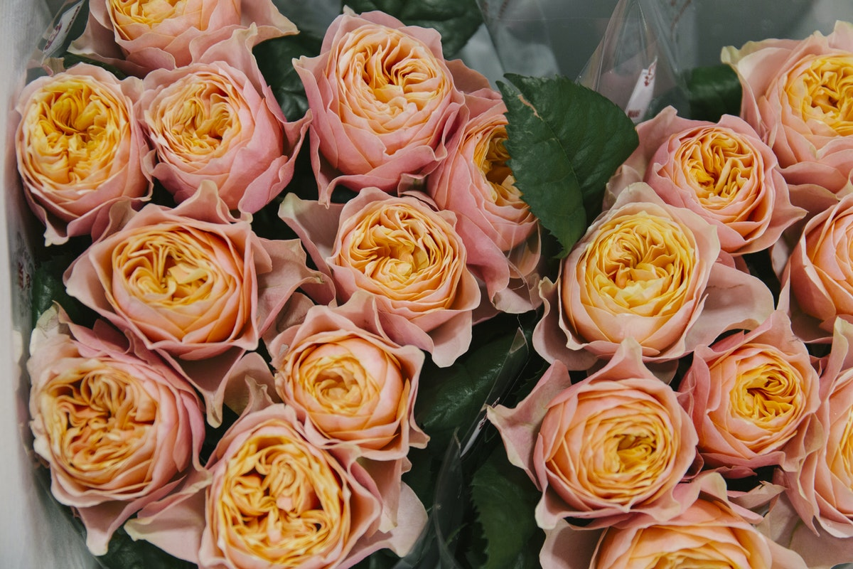New Covent Garden Flower Market Report Living Coral Pantone Of The Year 2019 Vuvuzela Roses At Bloomfield