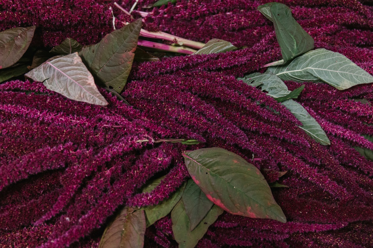 New Covent Garden Flower Market September 2018 In Season Report Rona Wheeldon Flowerona British Red Amaranthus At Pratley