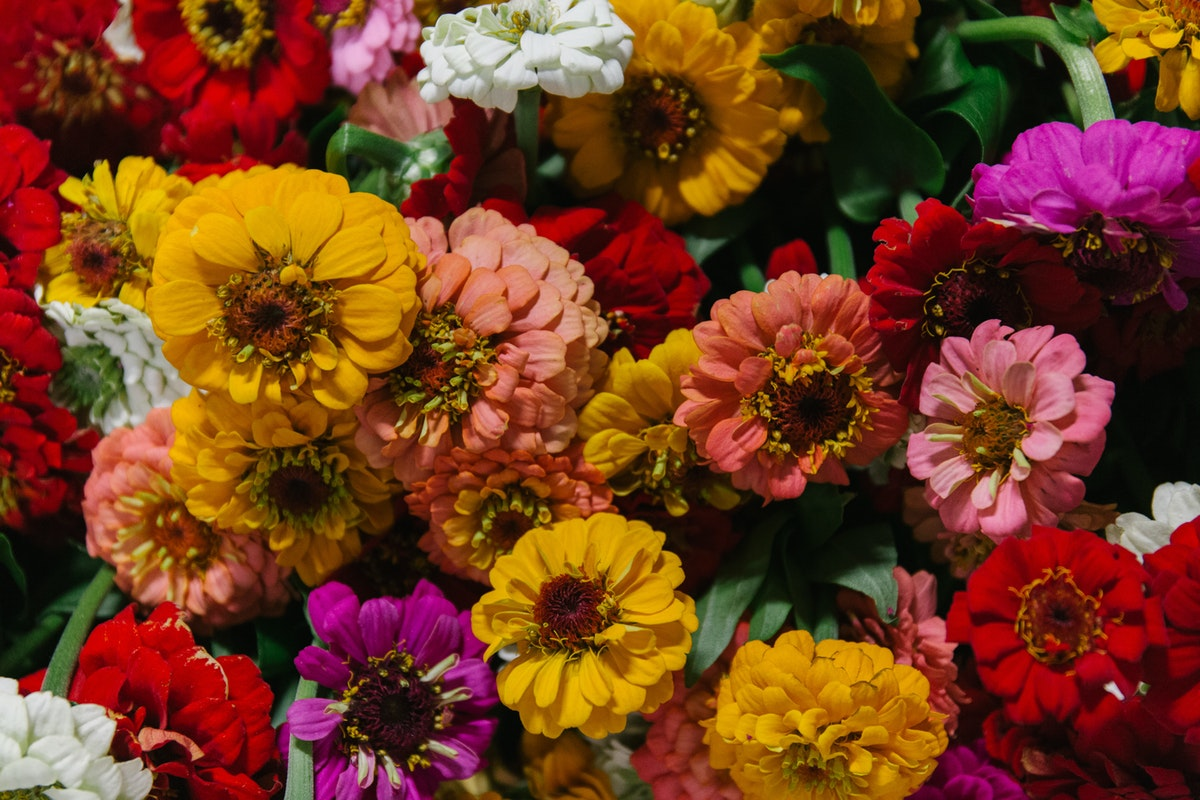 New Covent Garden Flower Market September 2018 In Season Report Rona Wheeldon Flowerona British Zinnias At Pratley