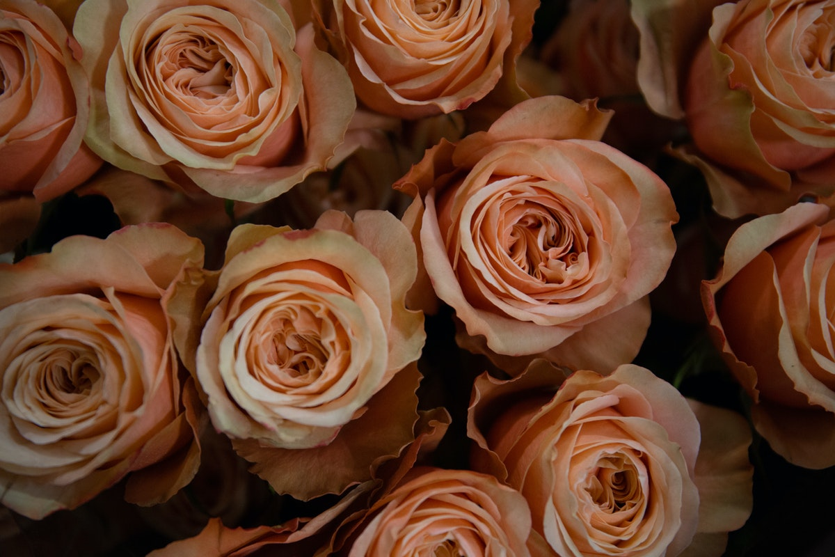 New Covent Garden Flower Market September 2018 In Season Report Rona Wheeldon Flowerona Kahala Roses At Zest Flowers