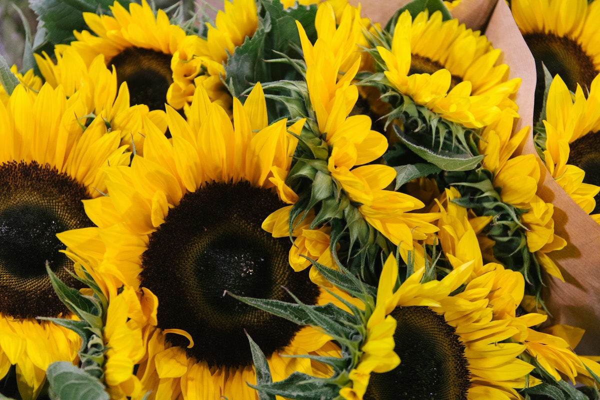 New Covent Garden Flower Market September 2018 In Season Report Rona Wheeldon Flowerona Sunrich Sunflowers At Dg Wholesale Flowers