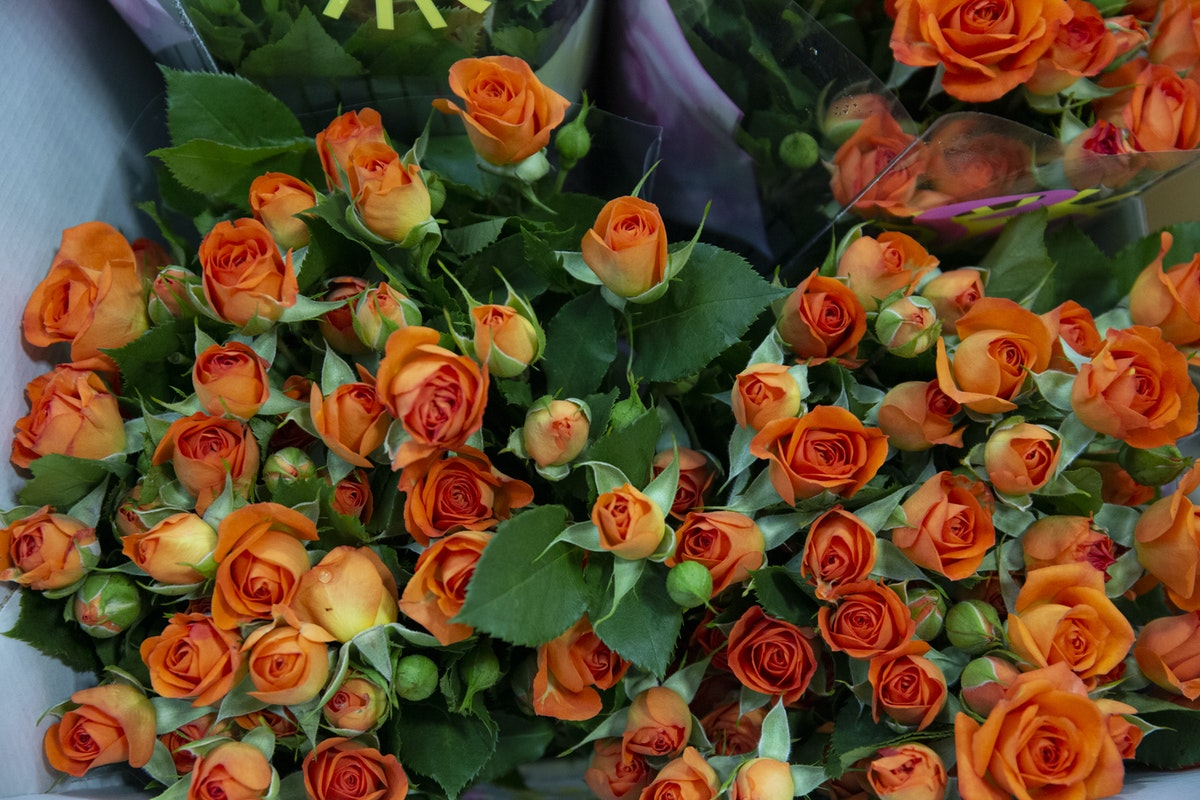 New Covent Garden Flower Market September 2019 A Florists Guide To Orange And Peach Roses Rona Wheeldon Flowerona Babe Spray Roses At R French Sons
