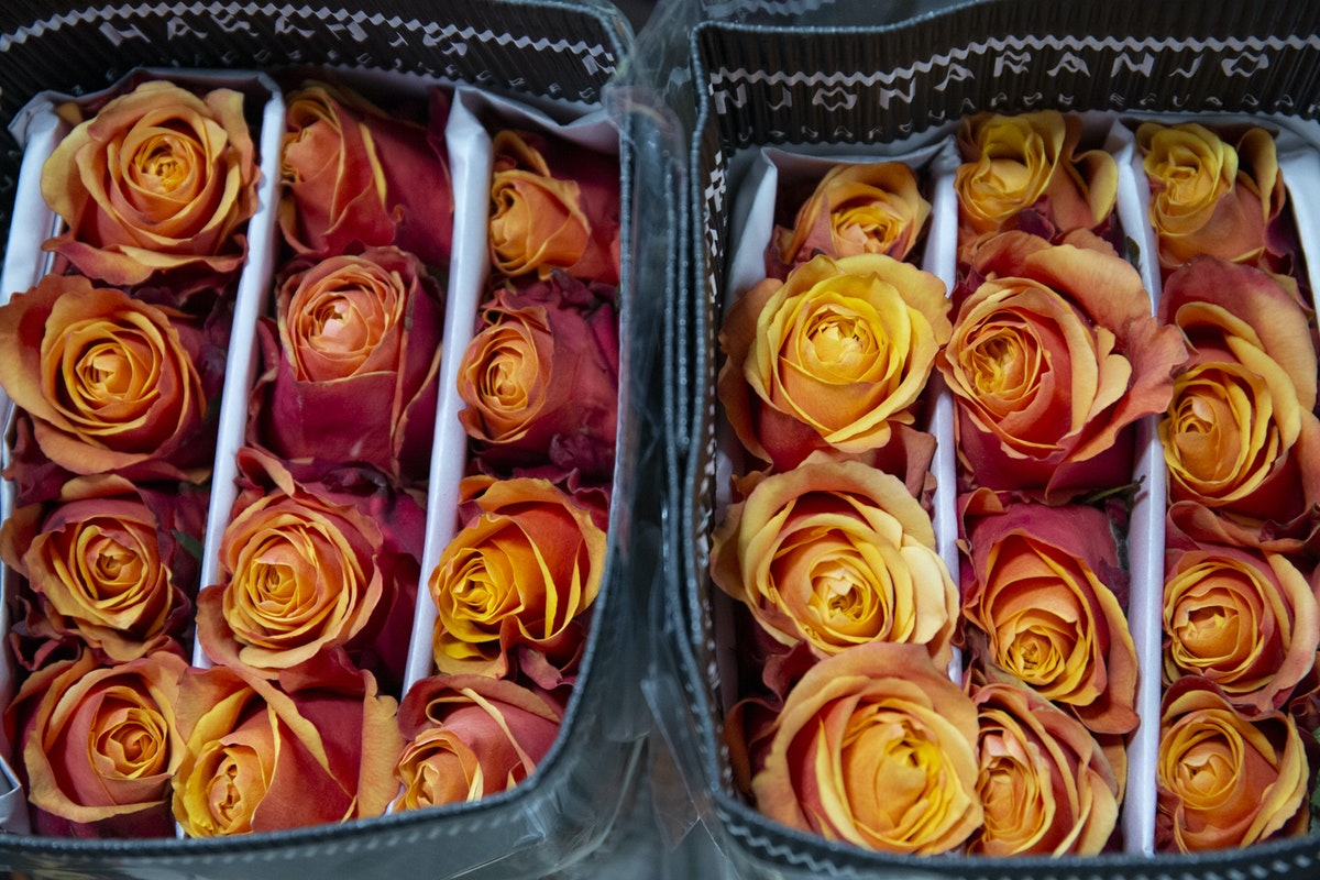 New Covent Garden Flower Market September 2019 A Florists Guide To Orange And Peach Roses Rona Wheeldon Flowerona Cherry Brandy Roses At Dg Wholesale Flowers