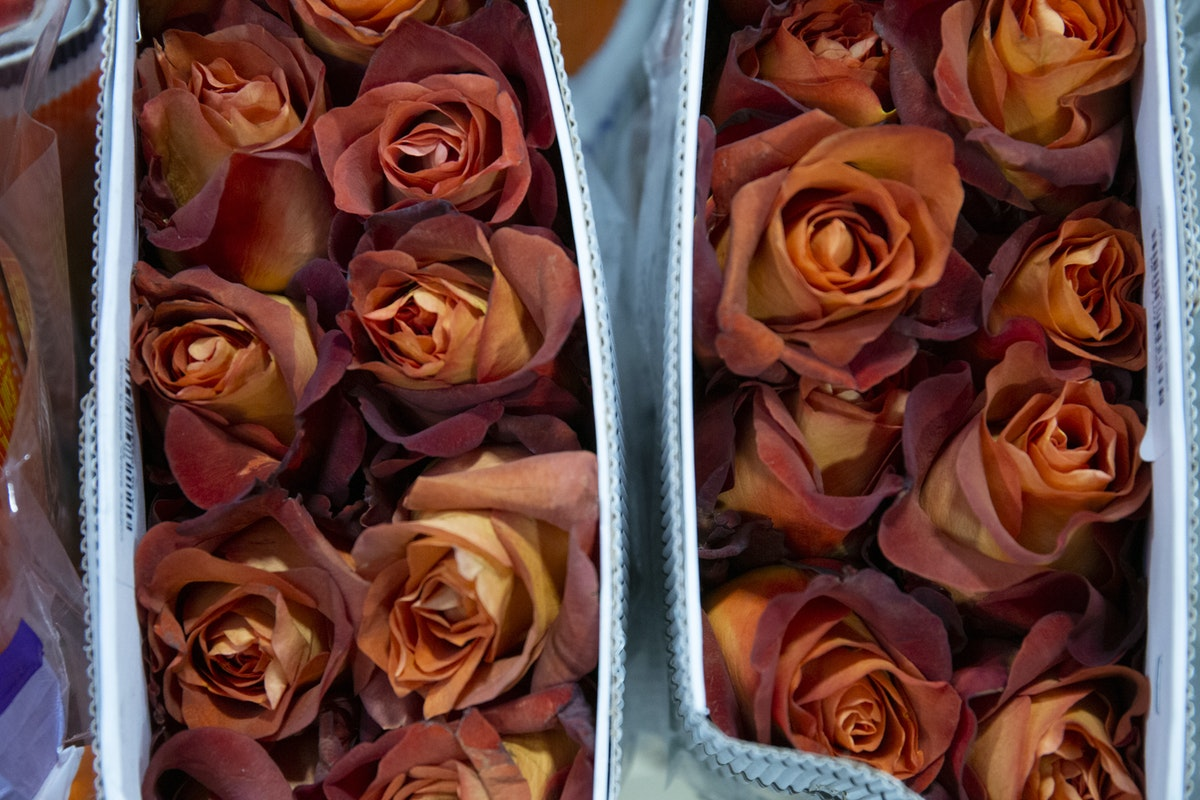 New Covent Garden Flower Market September 2019 A Florists Guide To Orange And Peach Roses Rona Wheeldon Flowerona Coffee Break Roses At Dg Wholesale Flowers