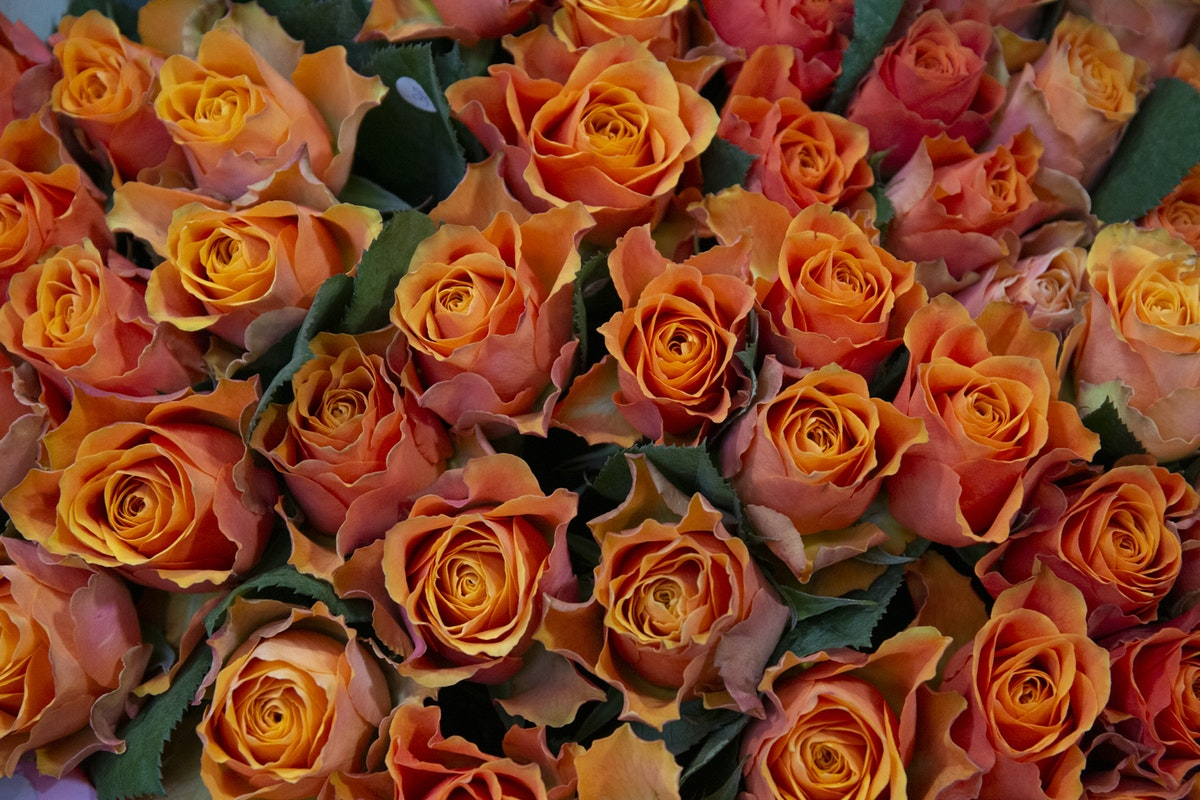 New Covent Garden Flower Market September 2019 A Florists Guide To Orange And Peach Roses Rona Wheeldon Flowerona Confidential Roses At R French Sons