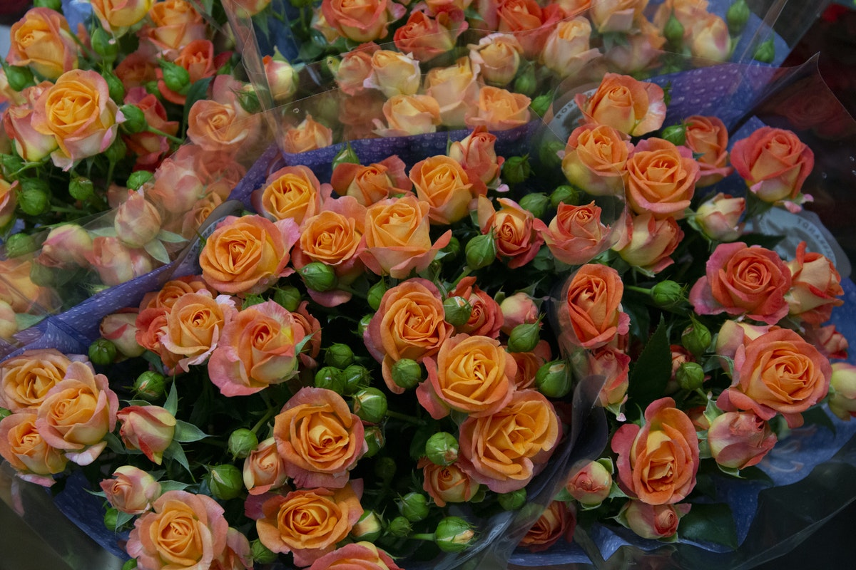 New Covent Garden Flower Market September 2019 A Florists Guide To Orange And Peach Roses Rona Wheeldon Flowerona Fiesta Bubbles Spray Roses At Dg Wholesale Flowers