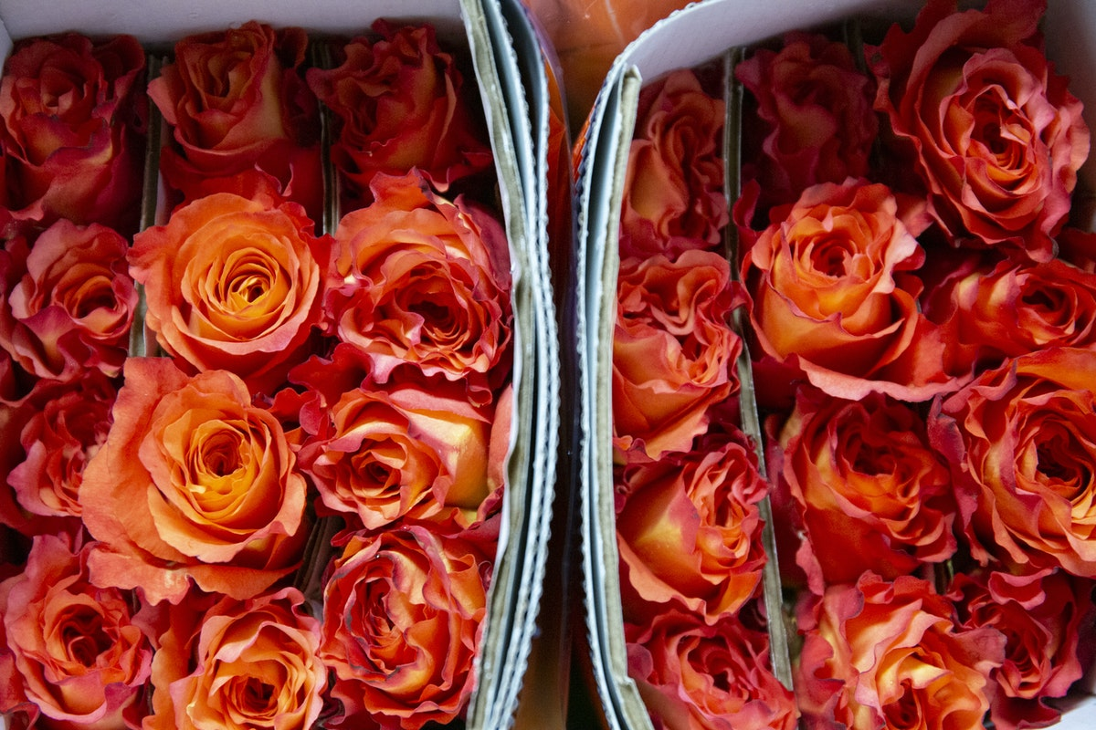 New Covent Garden Flower Market September 2019 A Florists Guide To Orange And Peach Roses Rona Wheeldon Flowerona Free Spirit Roses At Dennis Edwards Flowers