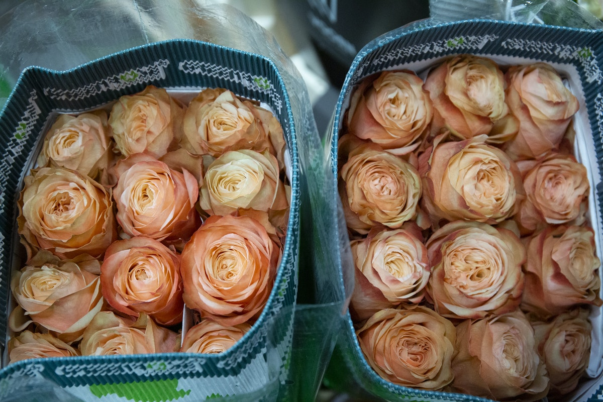 New Covent Garden Flower Market September 2019 A Florists Guide To Orange And Peach Roses Rona Wheeldon Flowerona Kahala Roses At Dg Wholesale Flowers