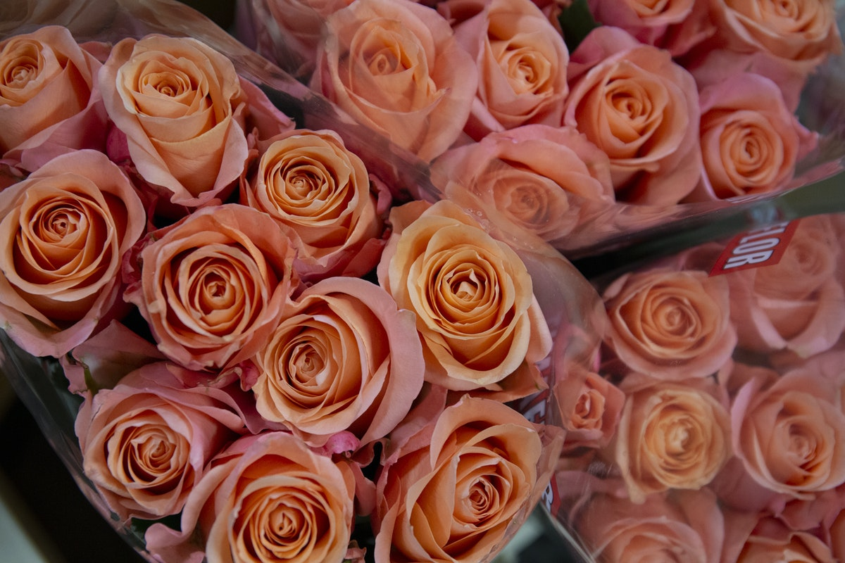 New Covent Garden Flower Market September 2019 A Florists Guide To Orange And Peach Roses Rona Wheeldon Flowerona Lady Margaret Roses At Dg Wholesale Flowers